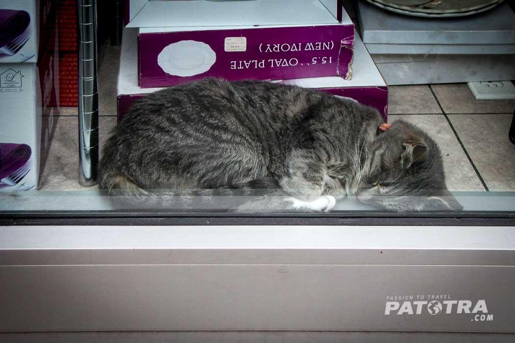 Bronx Cat