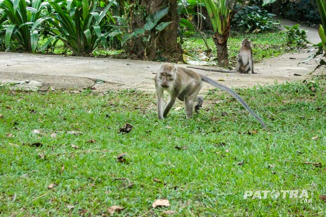Affen im Khao Sok Nationalpark