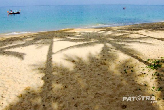 Palme im Sand
