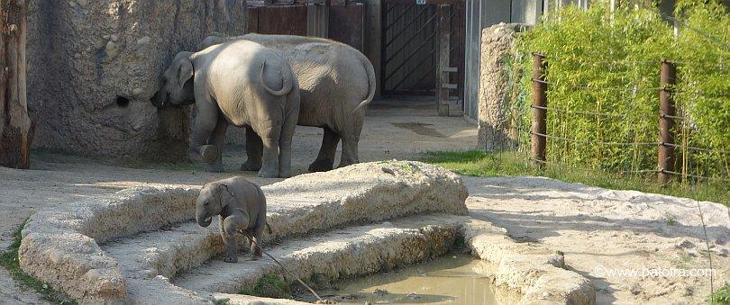 Elefanten Zoo 2