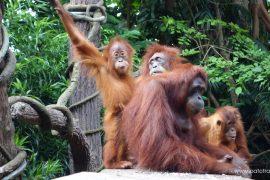 Singaore Zoo