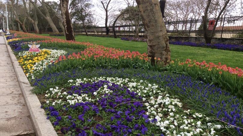 Tulpenbeete Istanbul