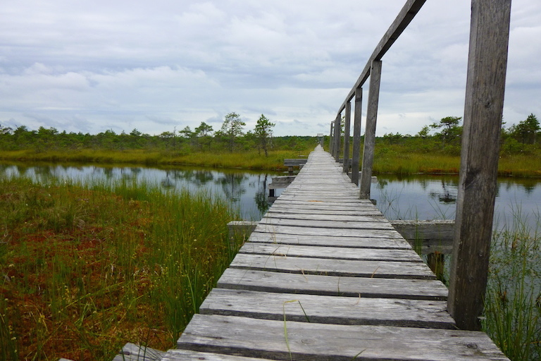 Estland Moor