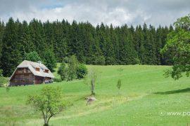 Beitragsbild Kuckucksuhr Schwarzwald