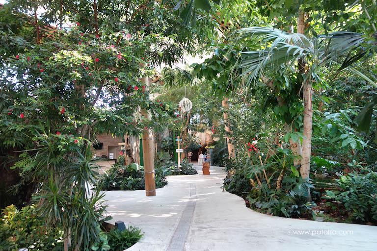 Tropischer Vegetation, Indoor