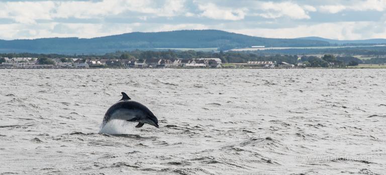 Delfine Schottland