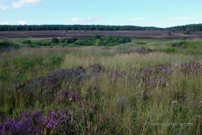 Heidelandschaft Schottland