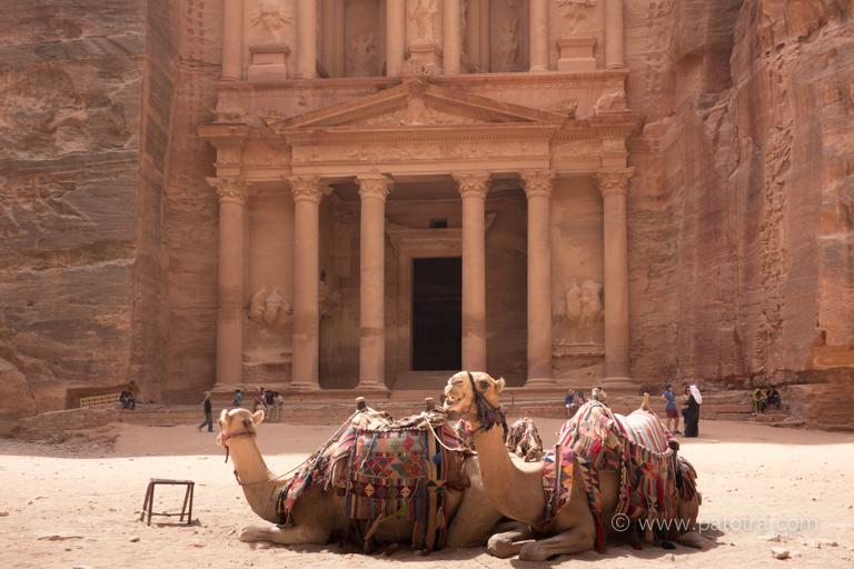 Kamele Petra