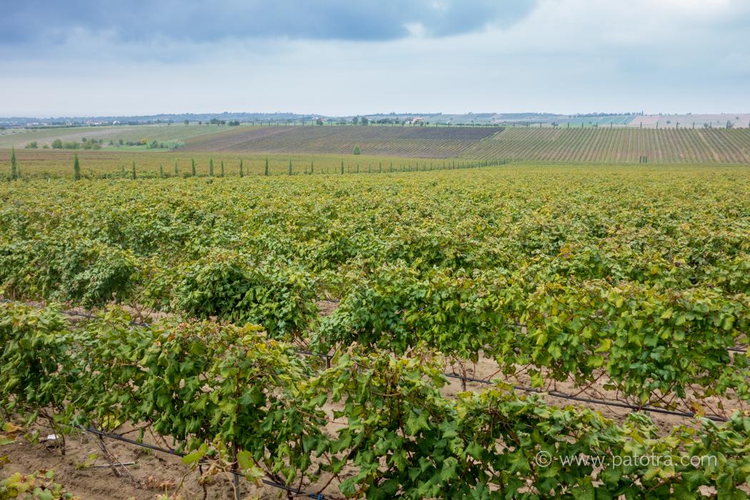 Wine Thessaloniki