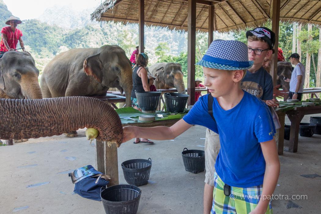 Feed Elephant