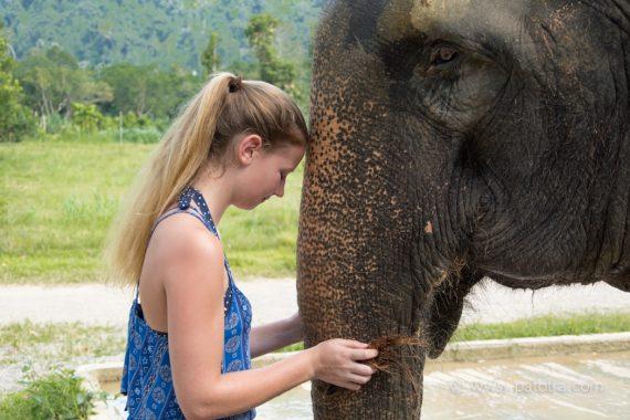 Elephant Hills Titelbild