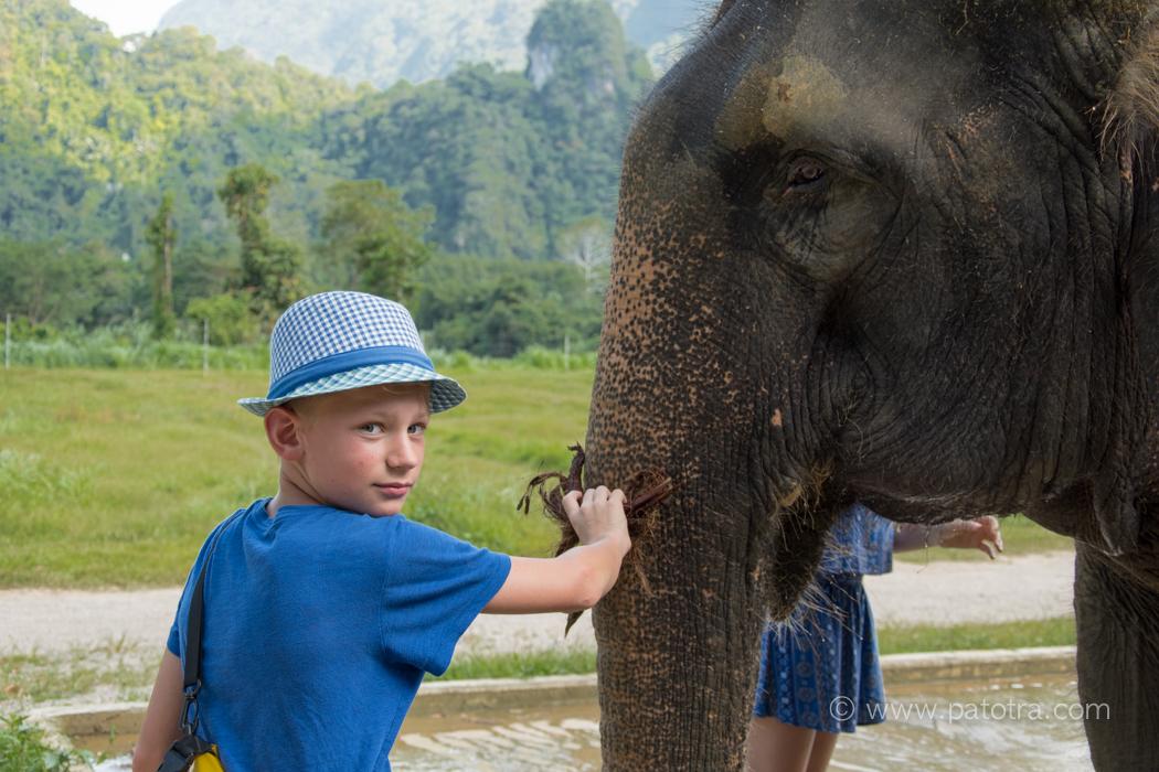 Pflege der Elephanten