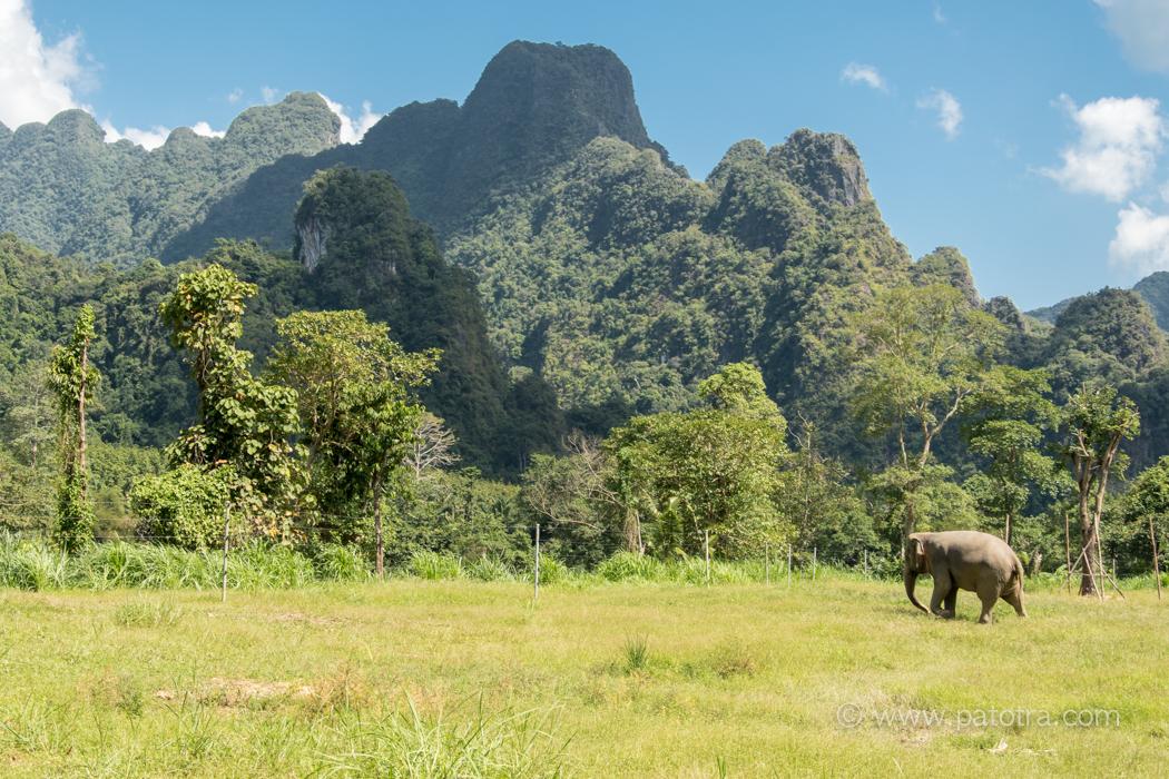 Khao Sok Elephanten
