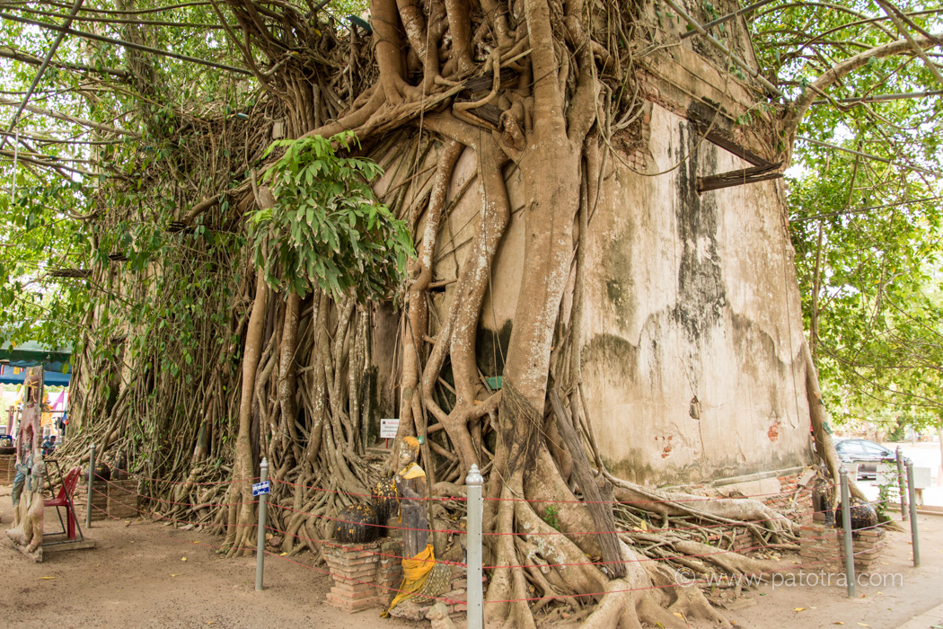 Tempel mit Banyan Baum