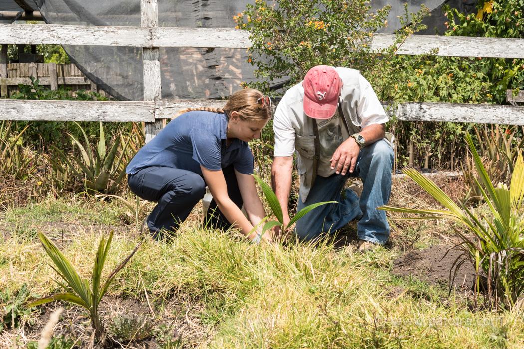 Zwei Personen pflanzen eine Palme