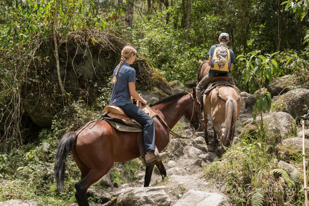 Zwei Teenager reiten auf Pferden durch den Dschungel