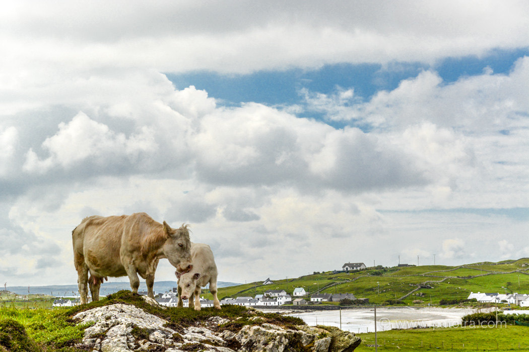 Trauminseln Inishbofin