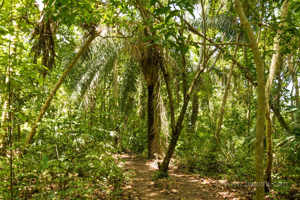 Tayrona Dschungel