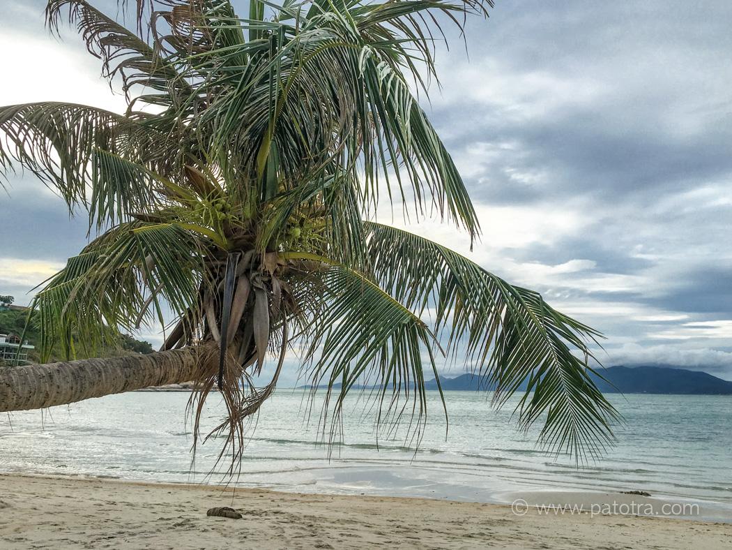Palmenstarnd Samui