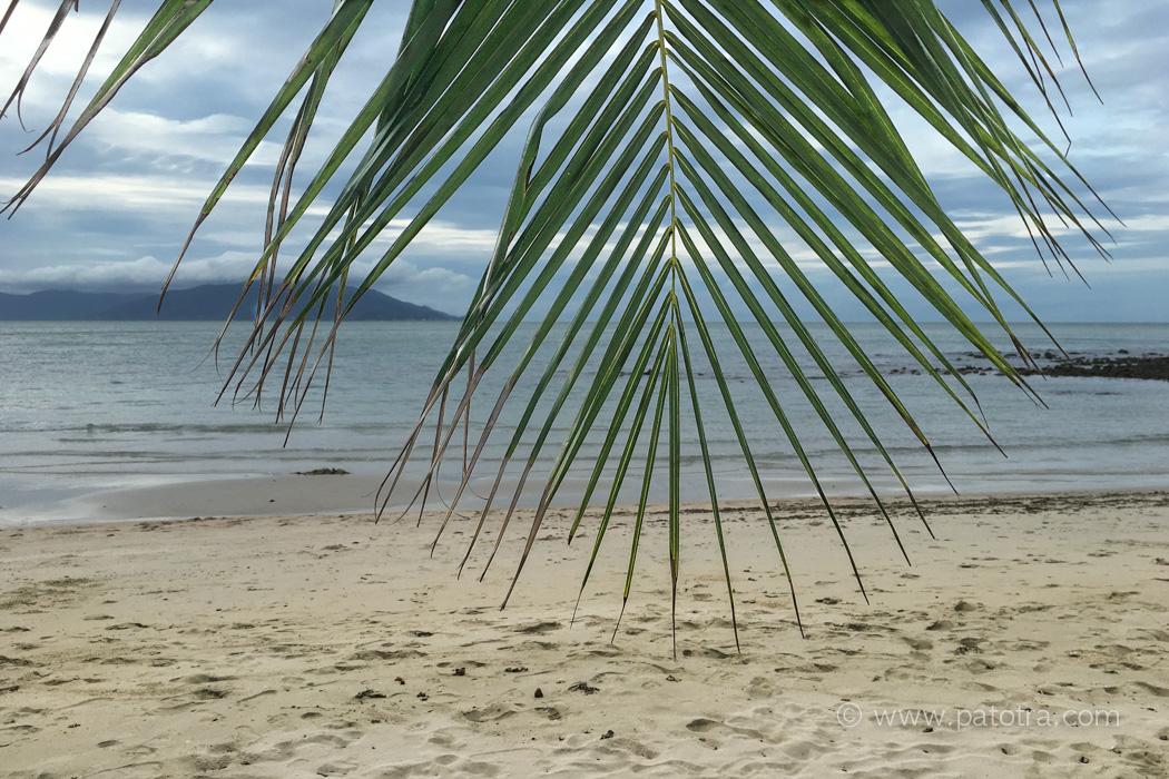 Strand Palme Samui