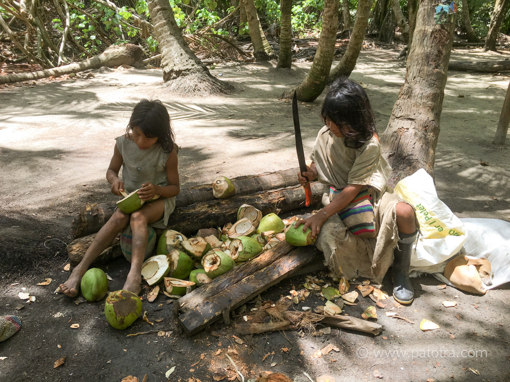 Indios Kokosnuss