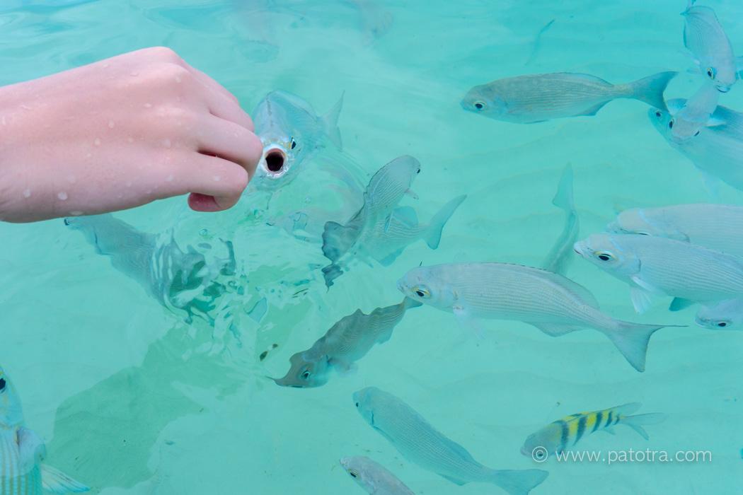 Fische im Paradies