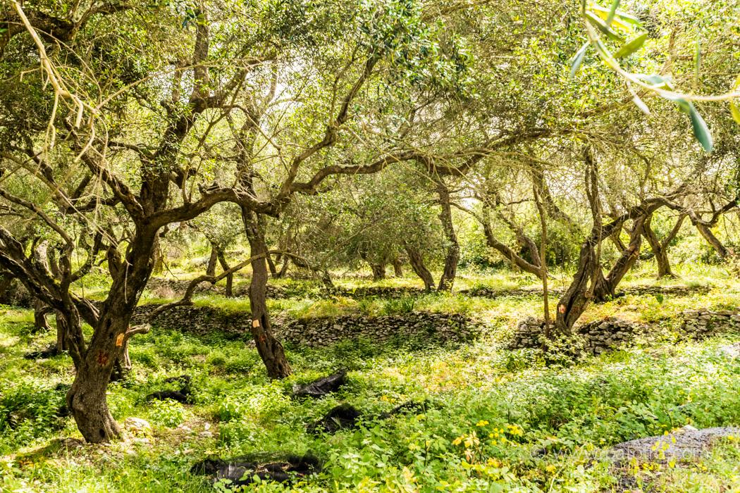Olivenhain Paxos