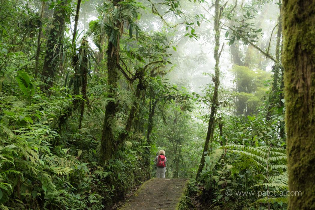 Costa Rica mit Kindern und Teenagern unterwegs im Monteverde Nebelwald