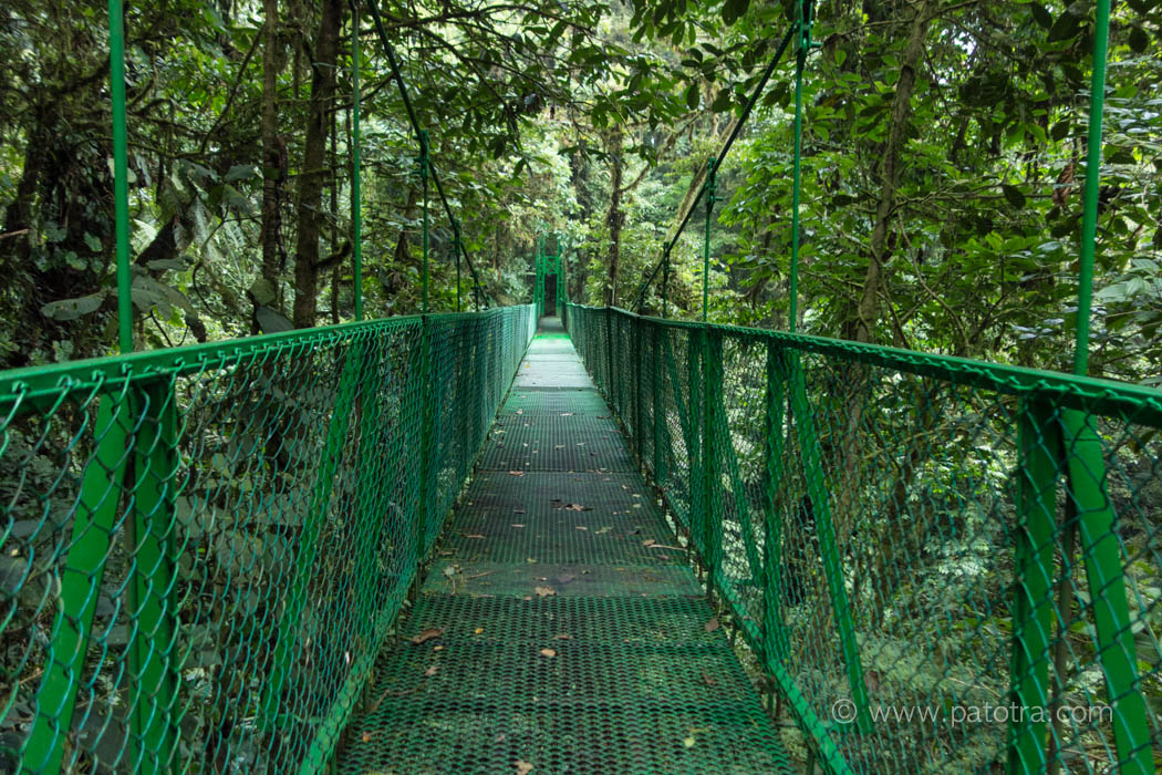 Baumwipfelpfad Nationalpark Monteverde