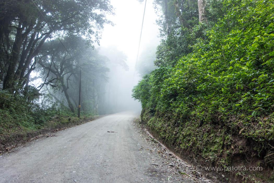 Nebel im Nebelwald Costa Rica