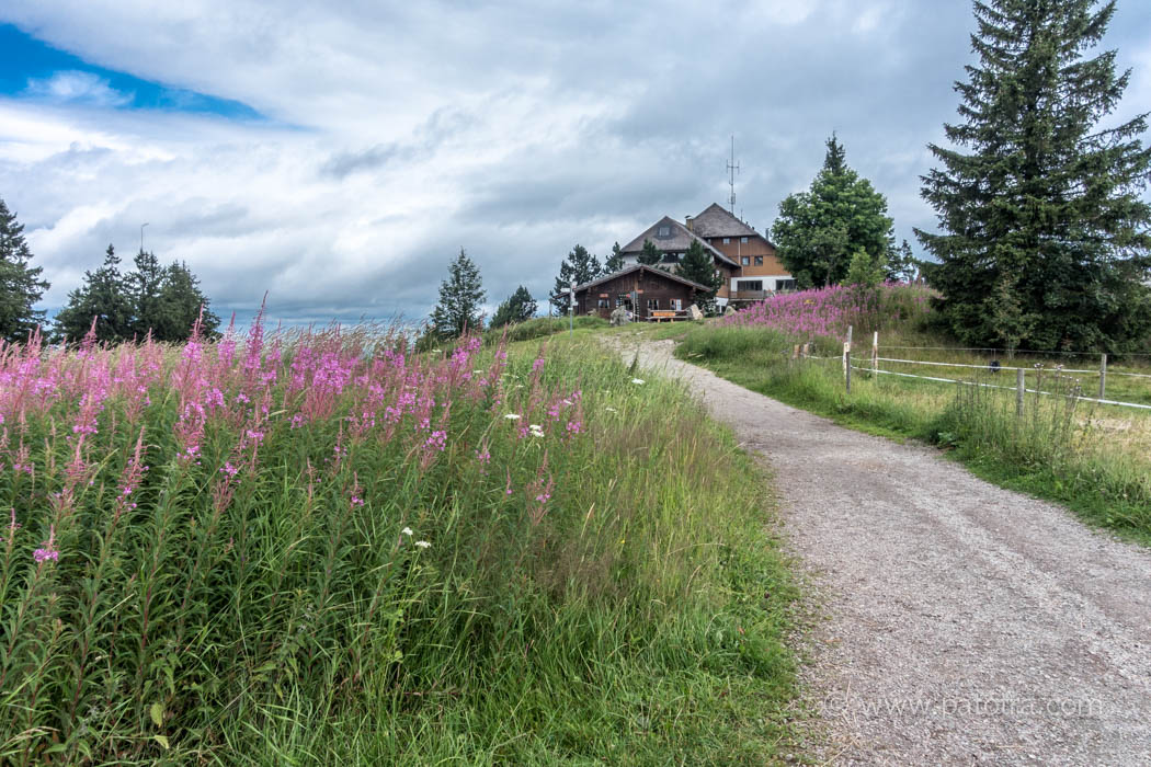 Wanderung Schwarzwald