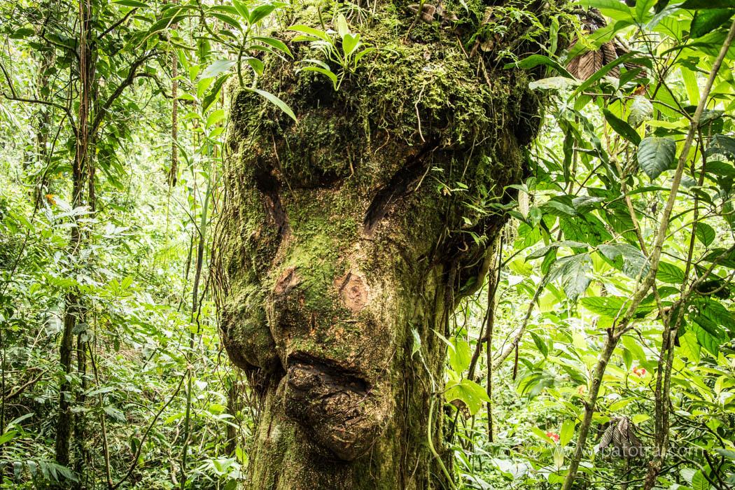 verwunschener Wald Costa Rica