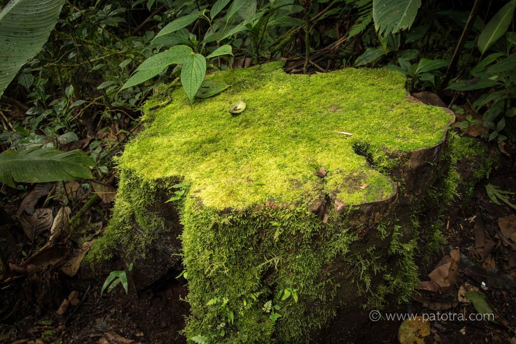 Nebelwald Moos Costa Rica