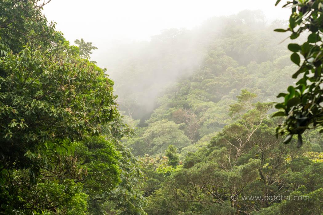 Verzauberter Nebelwald Costa Rica
