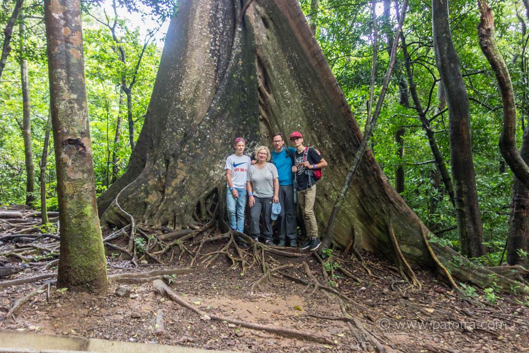 Mamutbaum Costa Rica Rincon de la Vieja