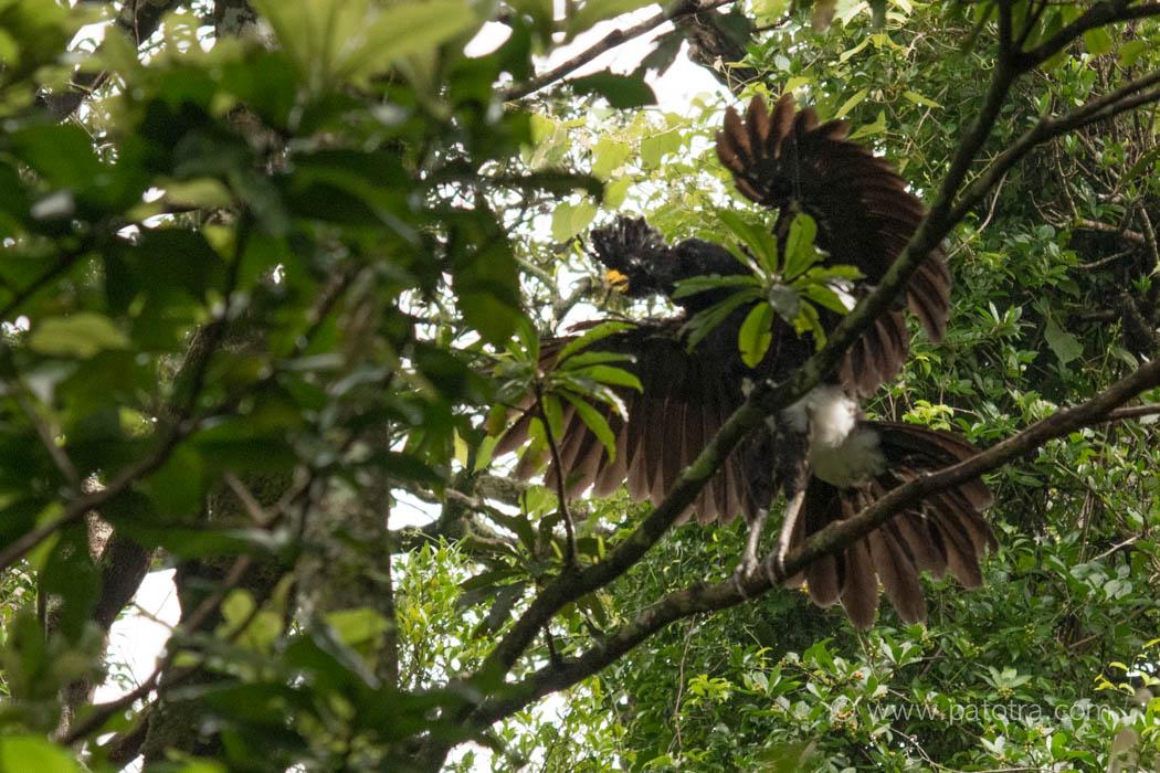 Rincon de la Vieja Vogel