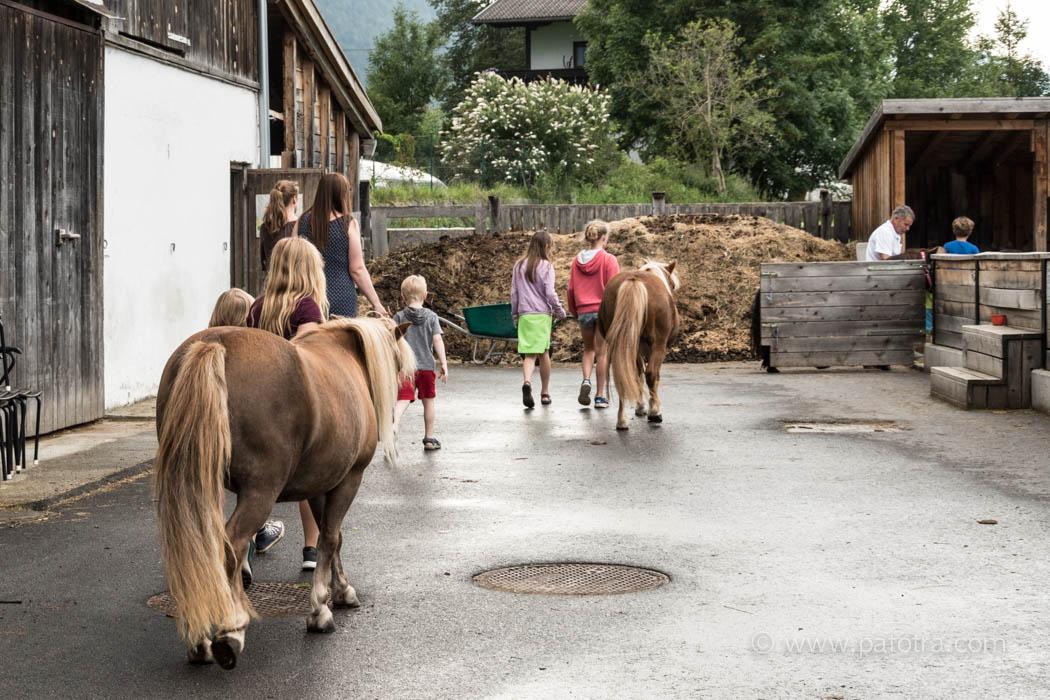 Ponys Stern Obsteig