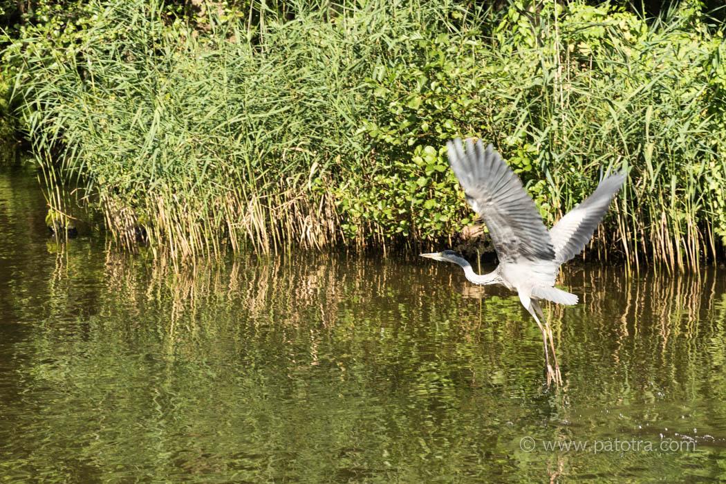 Vogel Mecklenburg Vorpommern