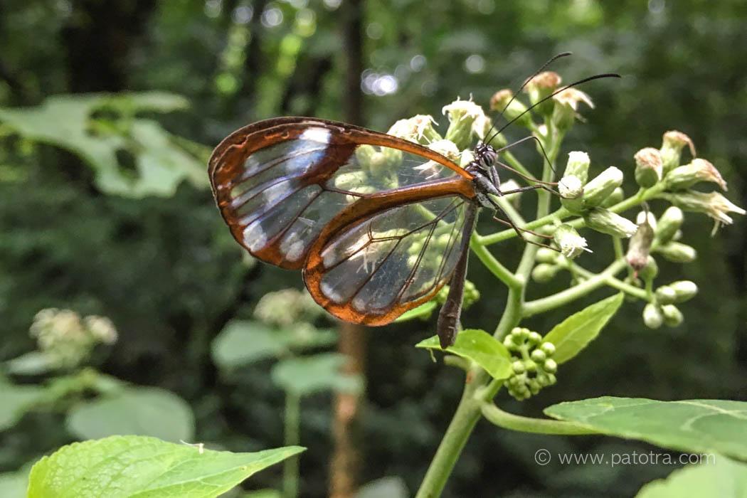 Zarter Schmetterling Rincon de la Vieja