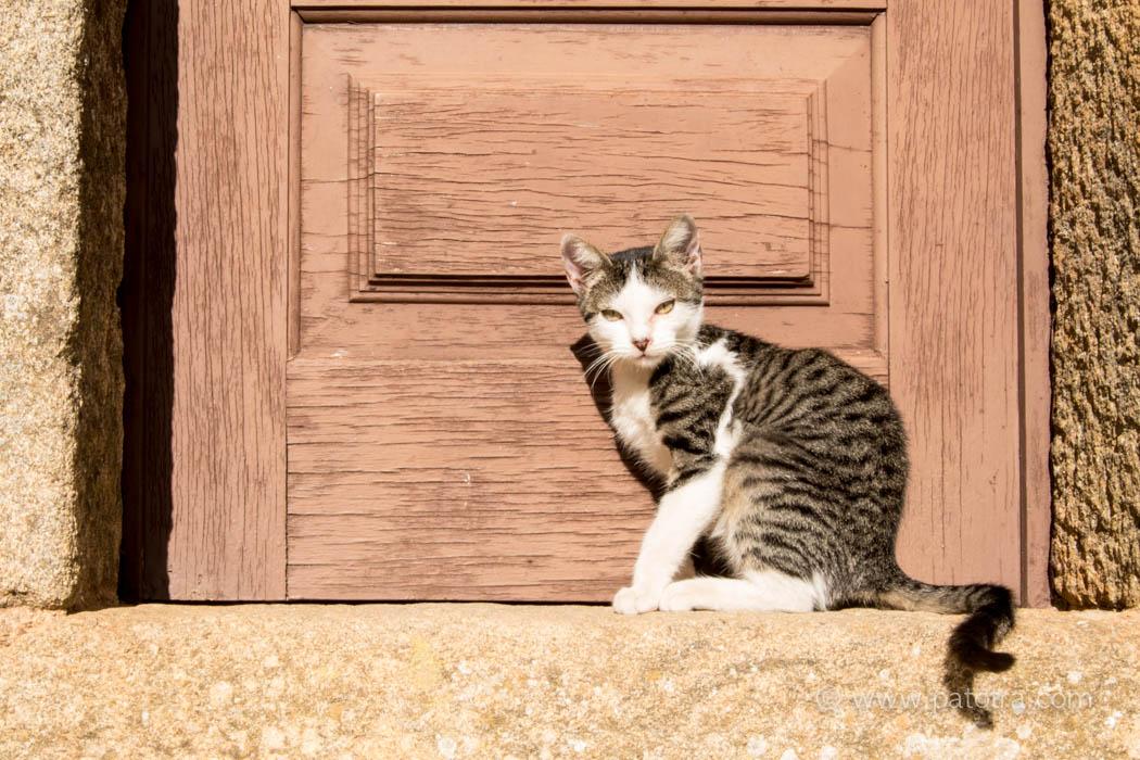 Katze Costelo Rodrigo