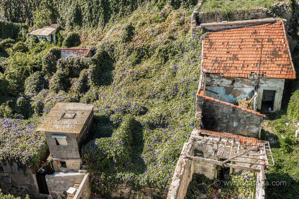 Porto die Natur erobert die Stadt
