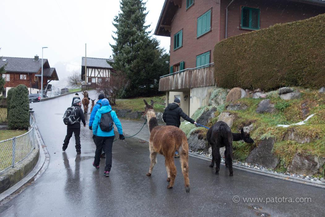 Lama Trekking Bodensee