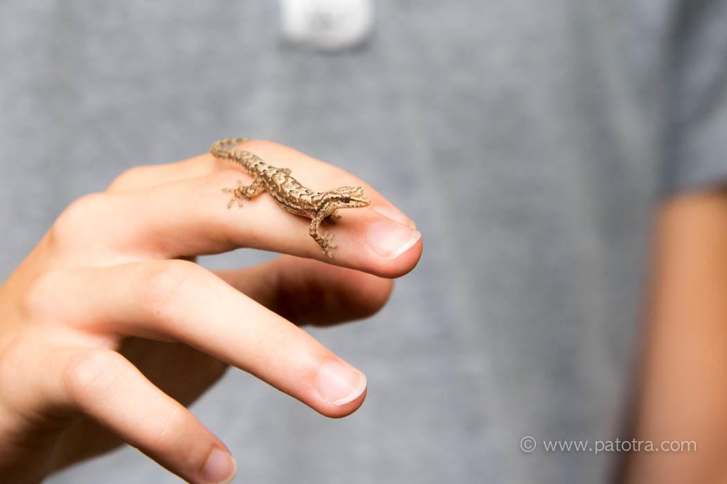 Gecko Manuel Antonio