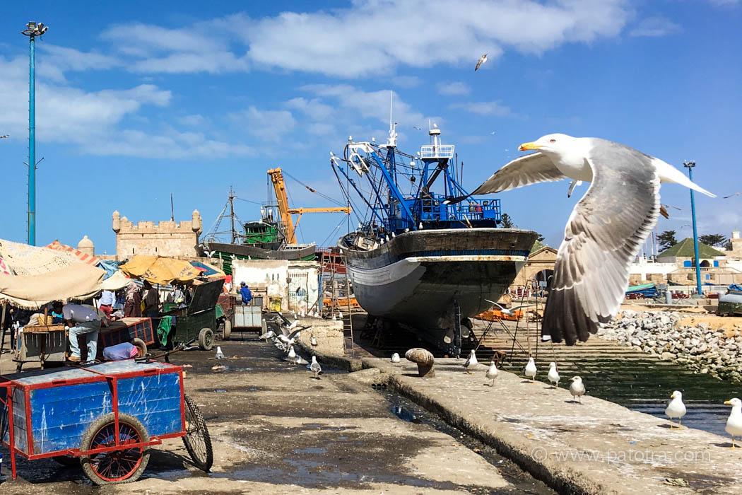 Essaouria Fischmarkt