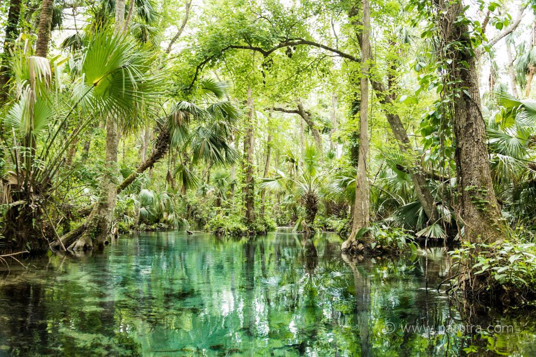 Florida Rock Springs Apopka