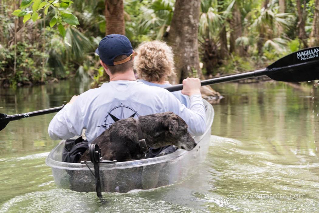 Kayak mit Hund
