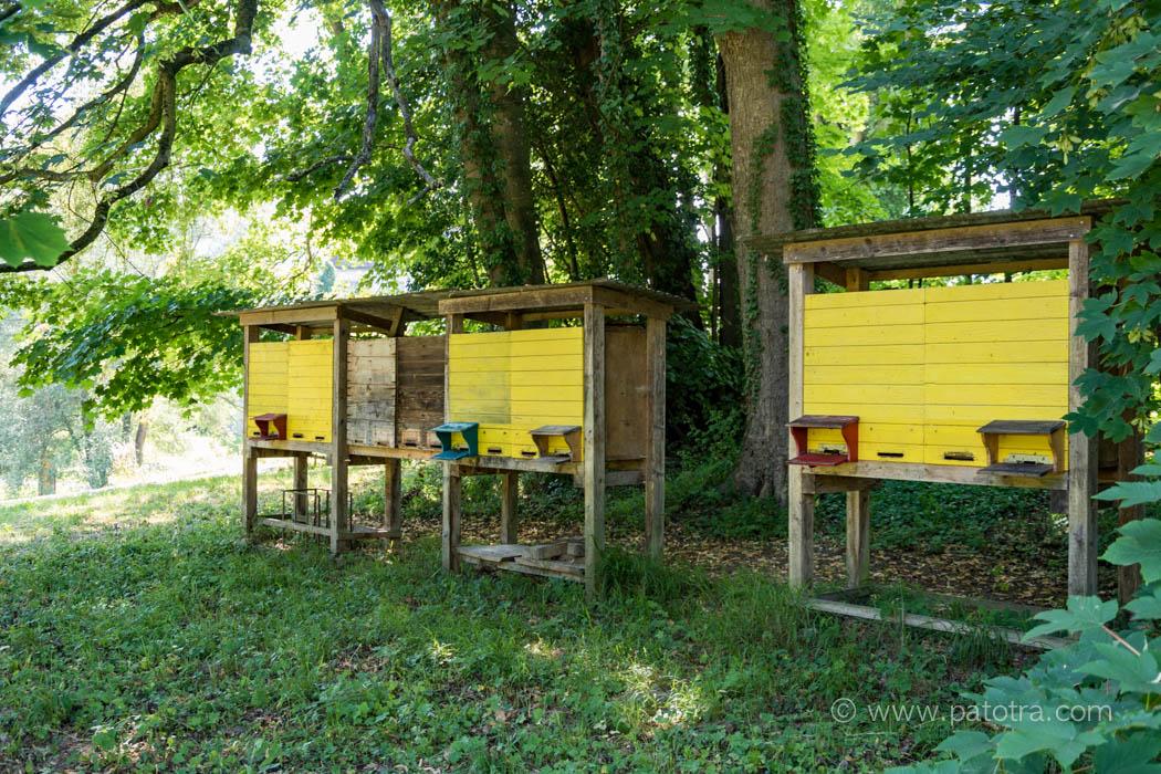 Bienen Park Wartegg