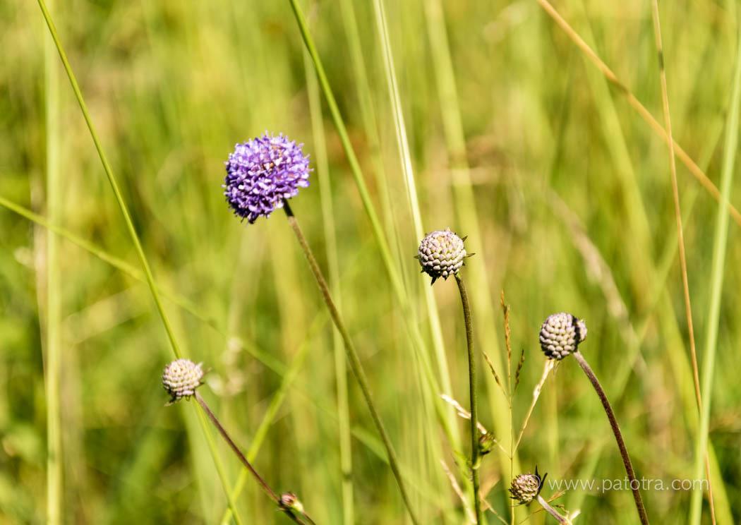Blumen Feuchtwiese