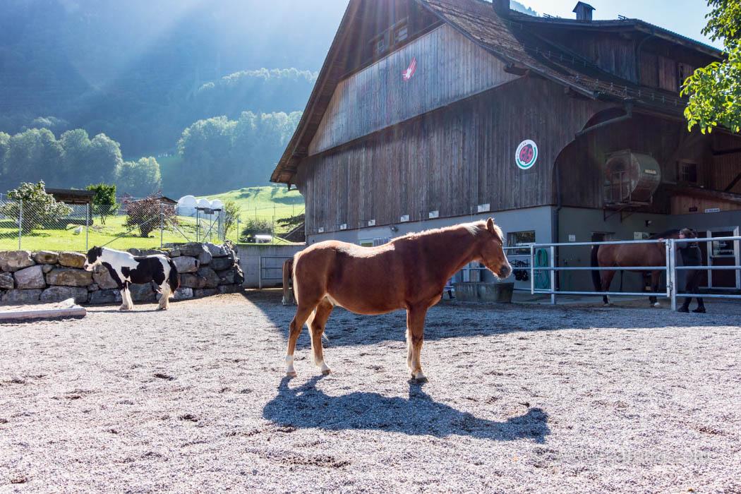 Fronalp Bauernhof