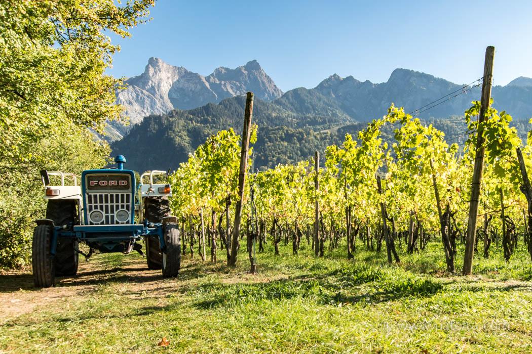 Weinberg Maienfeld-Flaesch mit Traktor